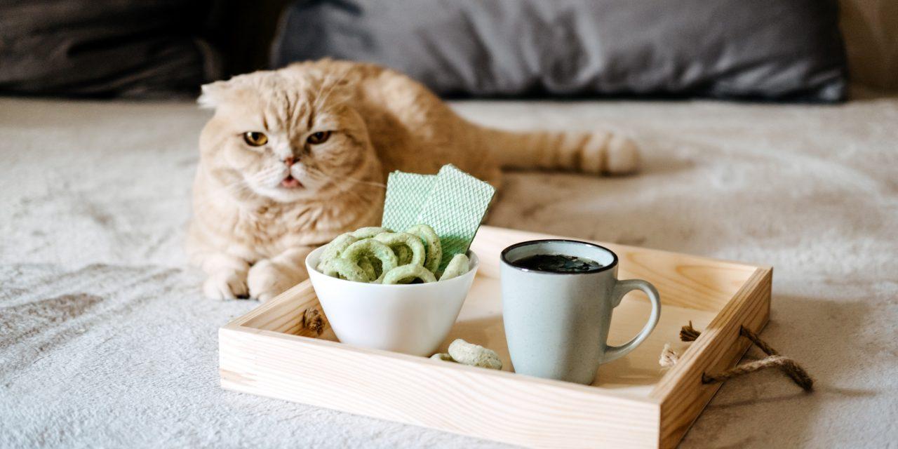 Friandise CBD pour chat : comment choisir ?
